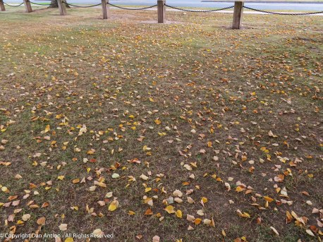 Fallen leaves are beginning to blanket the park in this area.