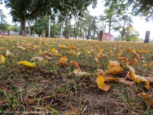 Maddie's eye view of the fallen leaves.