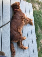 The sun was still shining and the Trax was warm. Maddie moved to her deck.