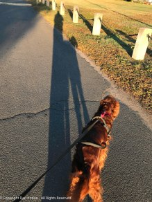 Not content to be represented by her shadow, Maddie crossed my path.