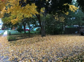 I guess this is why we call it fall.
