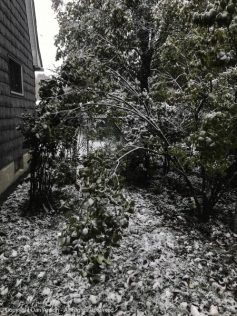I run the snow blower in there during most storms. I guess I need to do a little pruning here as well.