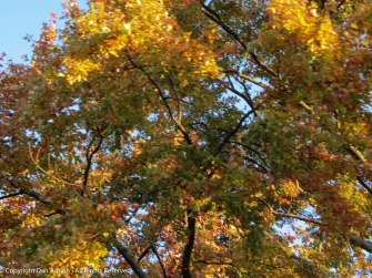 Some trees are changing colors in bits and pieces.