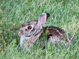 This little bunny wanted to continue eating. We didn't bother him.