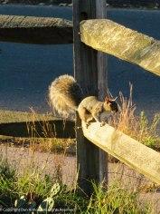 Squirrel at sunrise.