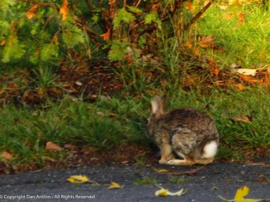 Bunny butt - I hope Rivergirl approves.