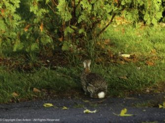 We don't see the bunnies very often, so I took two pictures for River last week.