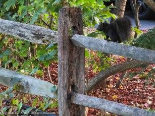 Smokey is running through the neighborhood.