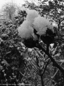 A glimpse of winter.