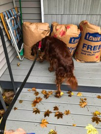 """The only dry spot on my porch and you put bags of leaves on it. What were you thinking?"""