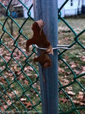 Help me! I don't know how this leaf got trapped behind the wire, but it looks so sad.