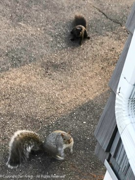 This is why I carry peanuts while cleaning the gutters.