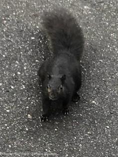 Hi Smokey. Yes, I think I can find a peanut.