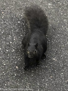 Hi Smokey. Yes, I think I can find a peanut.