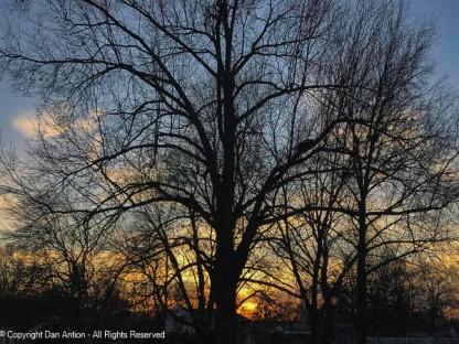 Sunset through our neighbor's trees.