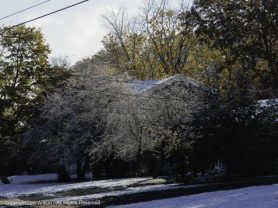 Those are our neighbor's bare crab apple trees.