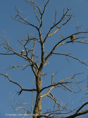 According to the bird watchers, the male is on the left and the female is on the right.