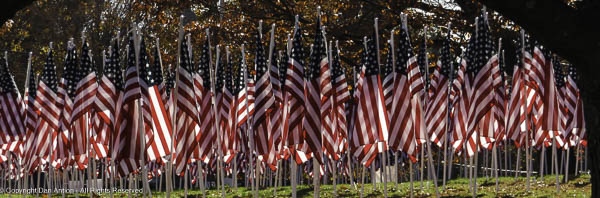Field of flags. A display for Veterans Day.