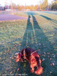 I was amazed at the shadow from the tree.
