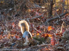 We don't feed the squirrels in the park. This one was playing hide and seek with us.