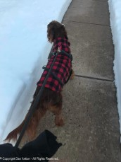 I know, Maddie. That's where you like to explore, Sorry, we're stuck on the sidewalk for now.