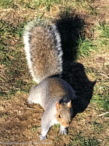 """""""The snow's gone, but it's pretty cold. A peanut would help me get the calories I need."""""""