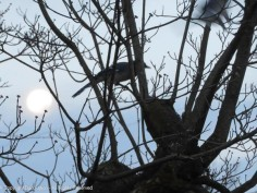 This is as close as they came and the blue jay got the focus. I tried manual focus, but he kept moving.