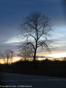 Bare tree at sunrise - another view of a favorite.
