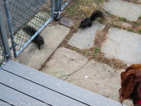Sorry Rivergirl, Two Smokey 1 & 2 are coming for a snack.