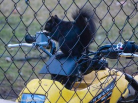 Smokey is ready to ride!