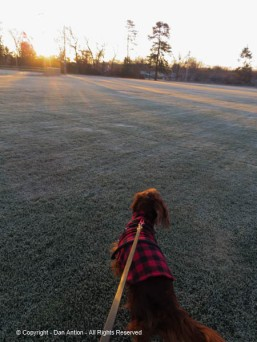 We had to cut across the soccer field to avoid other people with dogs.