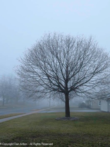 This is the tree I use to gauge the progress of the seasons.