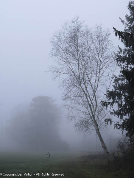 A very foggy start to the day.