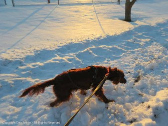 Maddie hasn't been able to get off the sidewalk, but she decided to tromp through the snow. I refused to follow her.