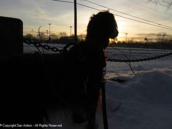 Maddie wanted to ponder the sunrise. I wanted to take a picture of it.