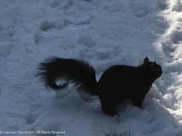 There was a little squirrel, wo had a little curl...