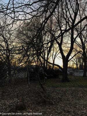 A little bit of suburban wilderness.