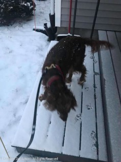 I'll take care of it later Maddie. I'll get all the snow off your deck.