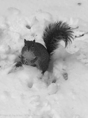 This is not a face I can easily refuse. They lose track of the peanuts, so we try to get close when we toss them.