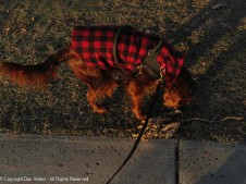 Maddie loves finding fallen leaves in the winter. I'll get a picture once she's done sniffing.