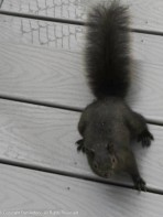 Um, Smokey, I can feed you in the yard, there's no need to come inside.