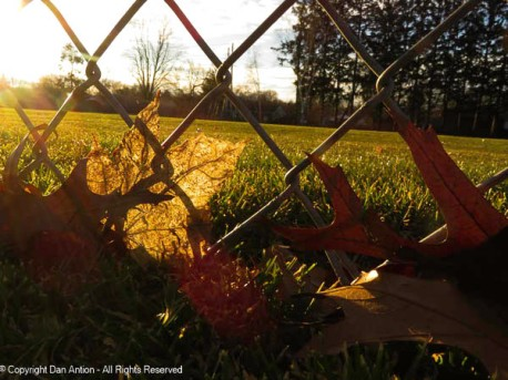 The leaf is in front of the fence.