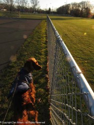 I don't know why, but Maddie likes walking along this new fence in the park.