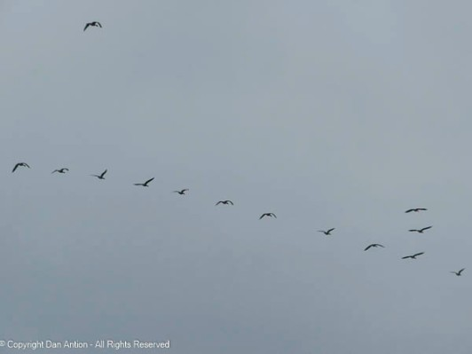 We've had a lot of geese heading south this week. I wonder what they know...
