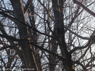 Smokey is in that tree. Can you find him?