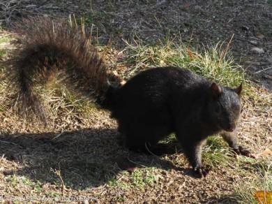 Hi Smokey. Would you like peanut?