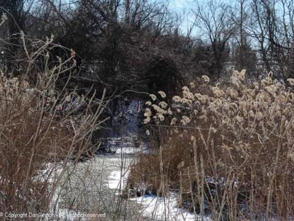 This little creek is frozen.