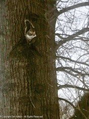 The gray squirrels love to sit on this stub of a branch to eat their peanuts.