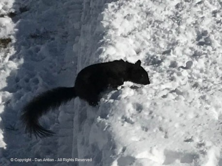 My bad. I tossed Smokey a peanut but it landed in the snow, not the path.