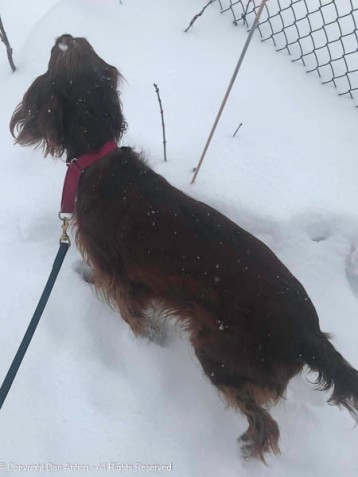 Maddie checking out the new snow.